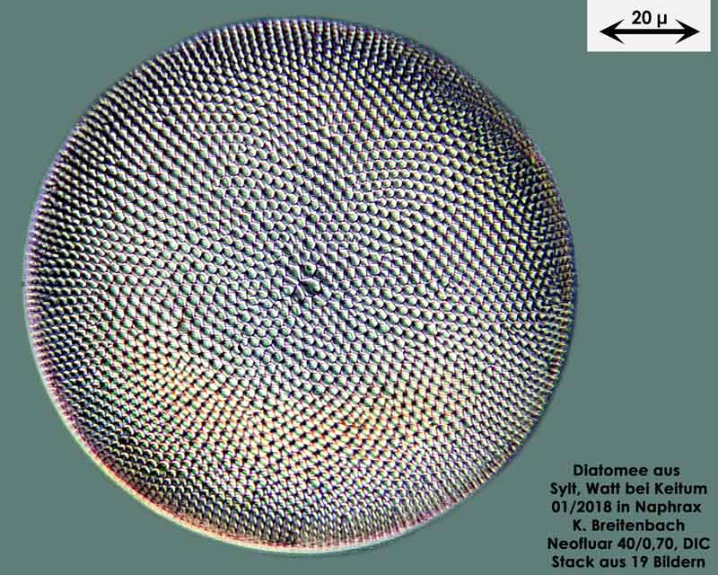 Bild 28 Diatomee aus Sylt/Keitum Watt, Art: Coscinodiscus pavillardii Forti 1922
