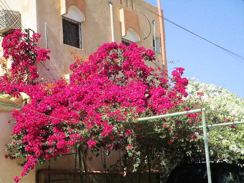 Bild 6 Fahrt durch die Oasenstadt Al Hamra