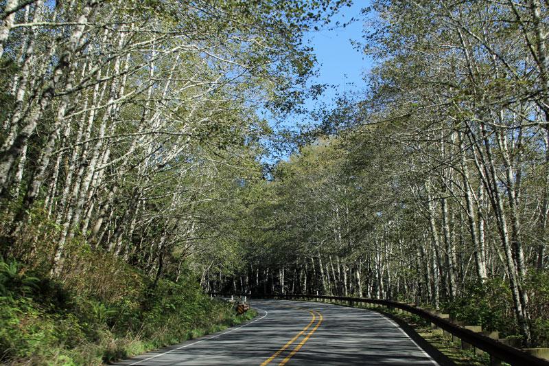 Bild 13 Auf dem Weg zu Cape Flattery