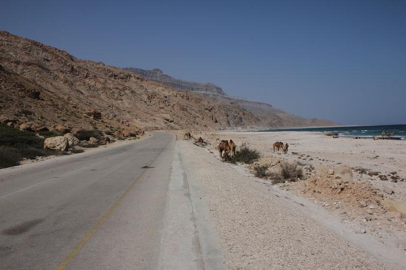 Bild 8 Blick auf die Küste und die Straße, Kamele am Straßenrand