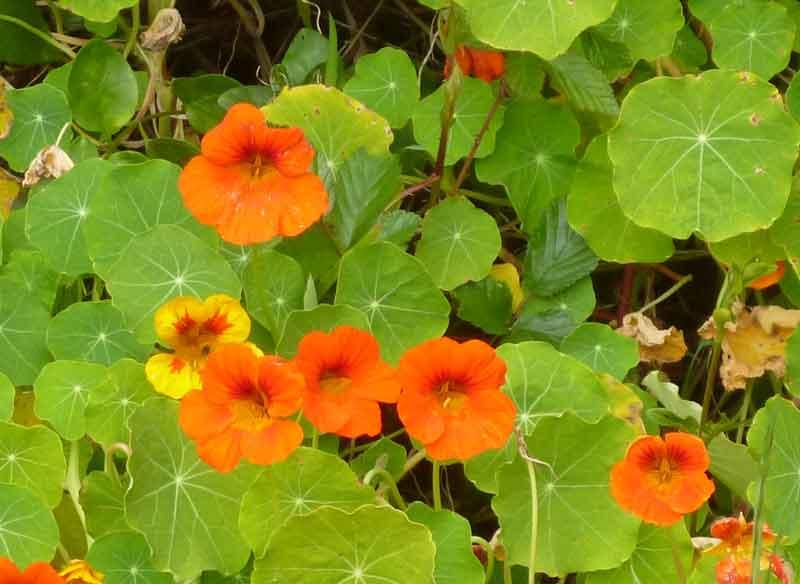 Bild 25 Pflanzen auf der Levadawanderung