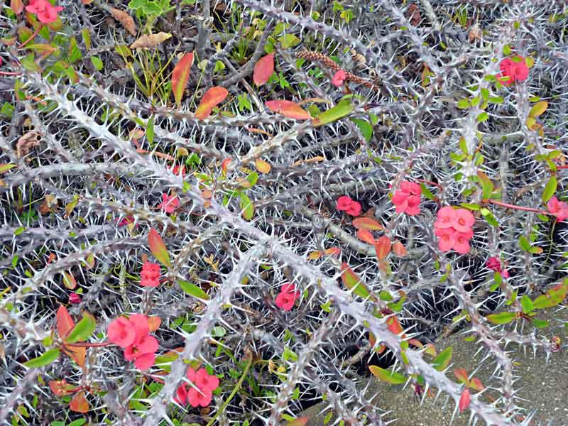 Bild 18 Pflanzen am Berghang