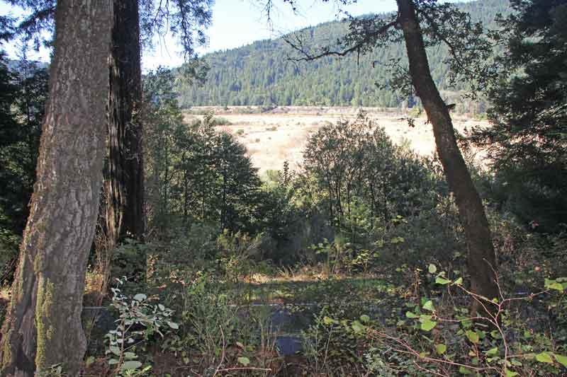 Bild 6 Wanderung im Humboldt Redwoods State Park