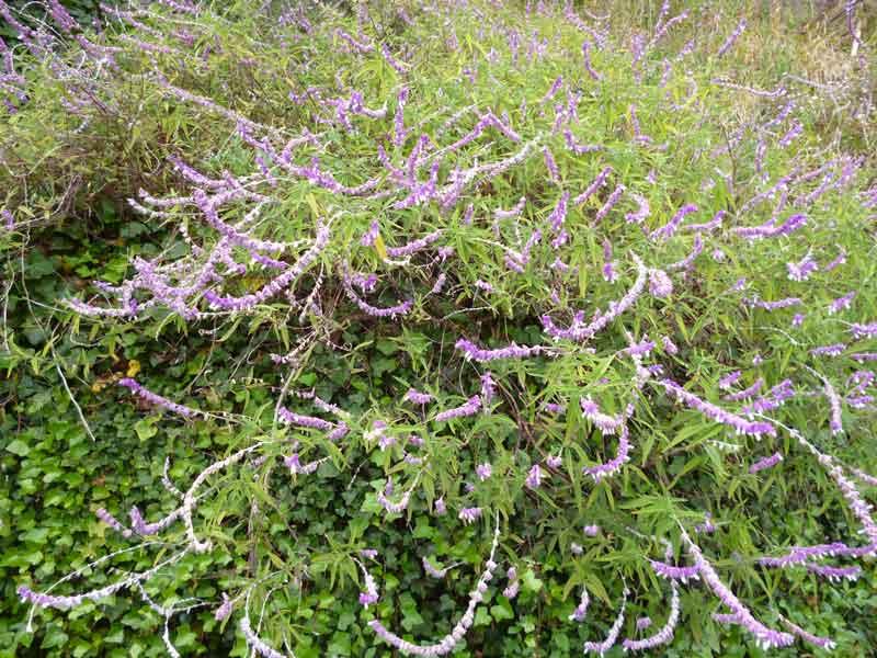 Bild 22 Pflanzen auf der Levadawanderung