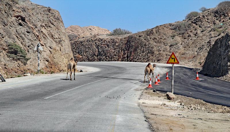 Bild 15 Blick auf die Straße, Kamele sind unterwegs