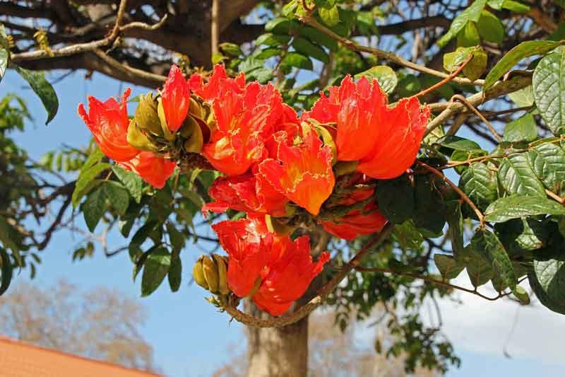 Bild 10 Überall Blumen, so haben wir uns Madeira vorgestellt