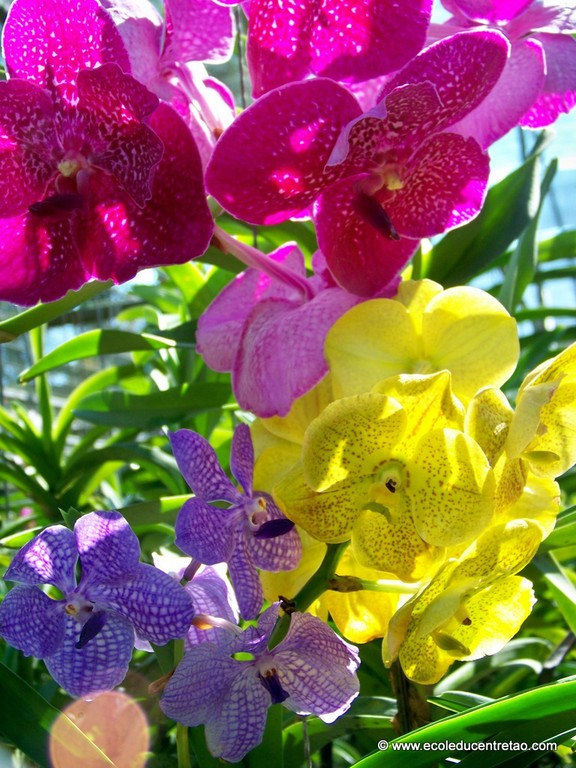 ferme aux orchidées