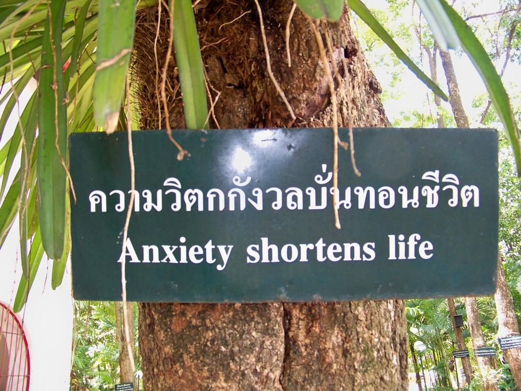 """l'anxiété diminue la vie"", ""anxiety shortens life"" !"