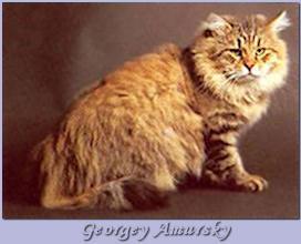 Georgey Amursky