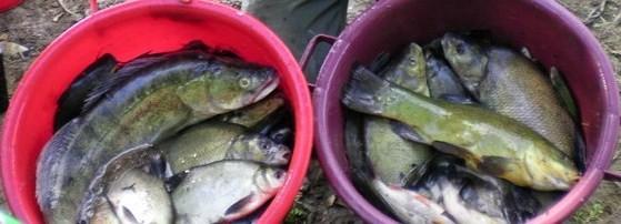 Une belle pêche variée ! (poissons remis vivants dans leur milieu naturel)
