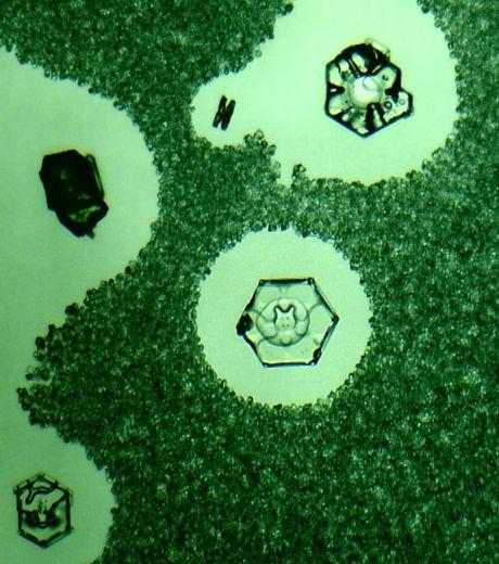cristal d'eau avec un chat au centre