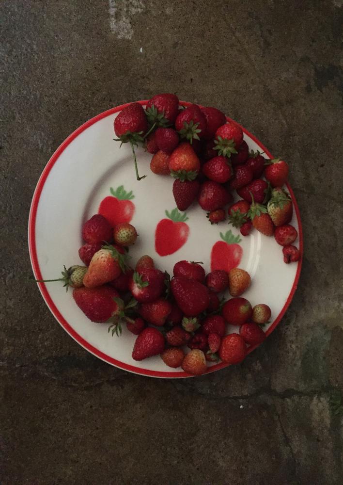 Le nostre fragole dal giardino