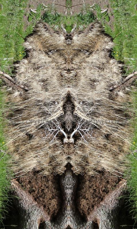 kraftbild, naturwesen