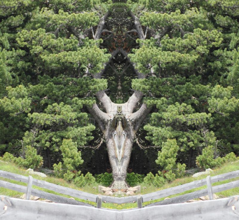 bäume, baumwesen, energiebild