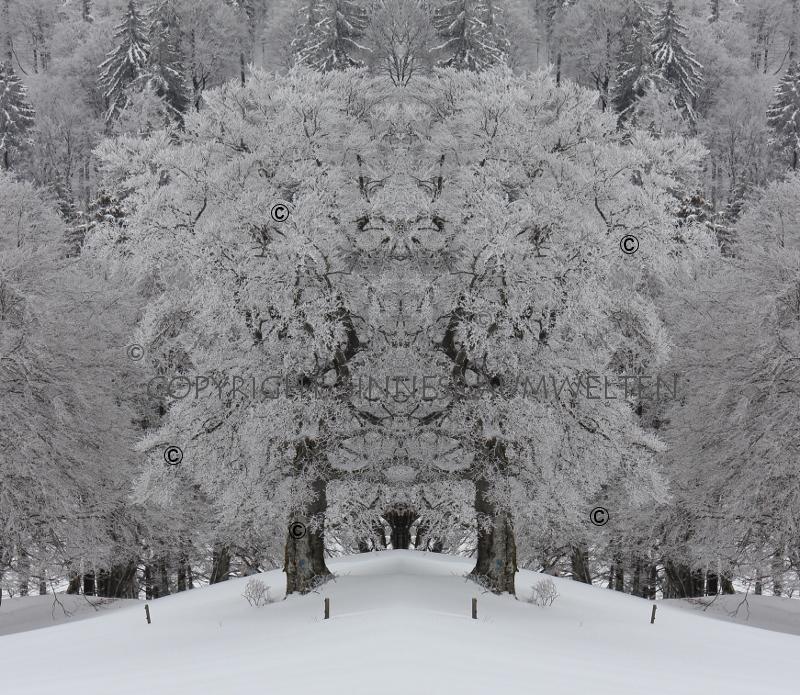 winterzauber grenchenberg