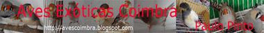 Aves Exóticas Coimbra