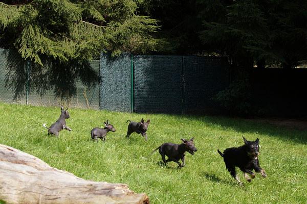 Dogsitter Merzig