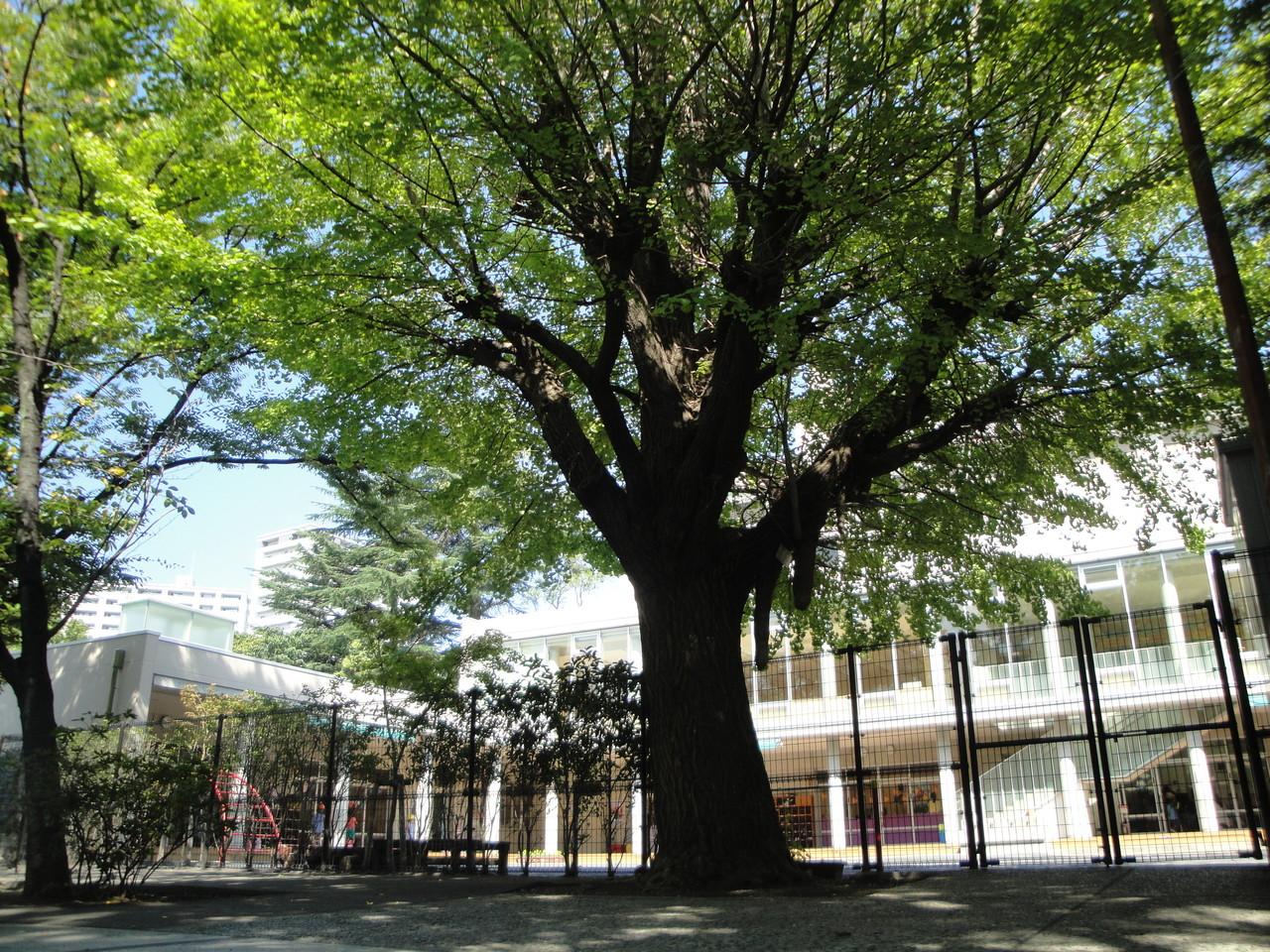 江東区保護樹木のイチョウ