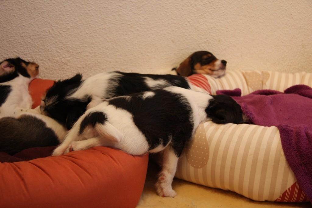 Wie war das? Schlafen in allen Lagen..
