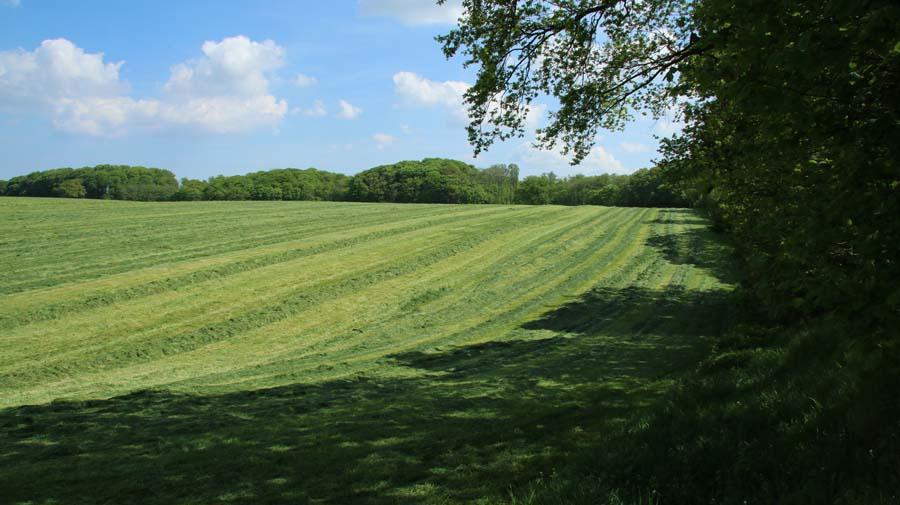 Die ersten Felder werden schon gemäht