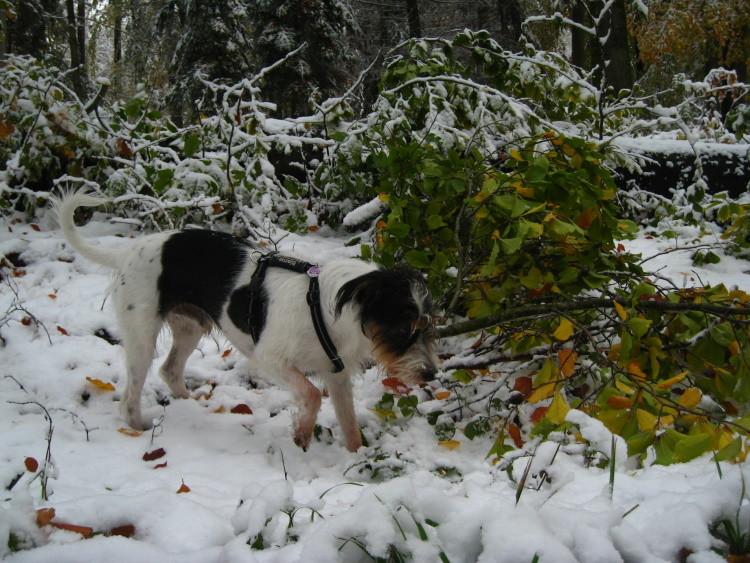 ...im ersten Schnee