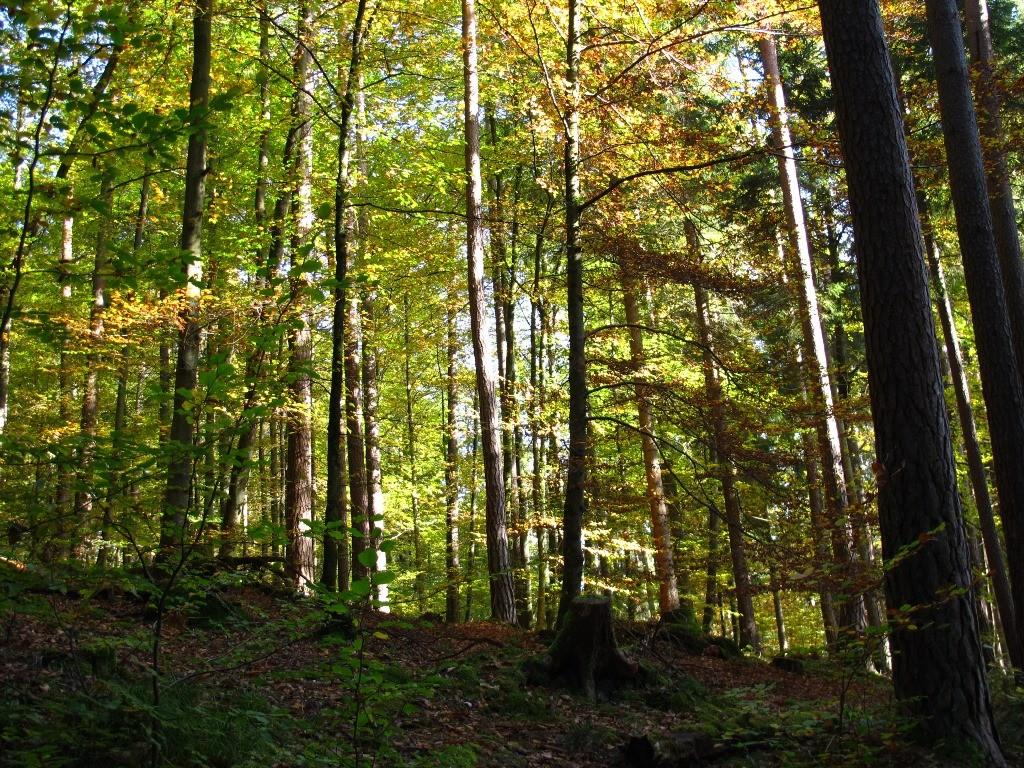 Weiter geht´s im Wald...