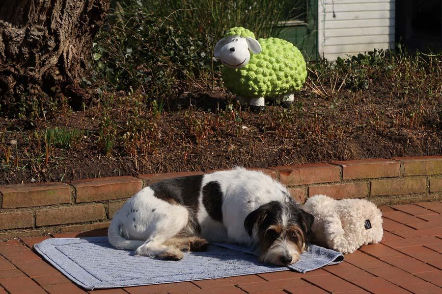 Das hol ich gleich mal mein Deckchen und meine Schafe ;-)