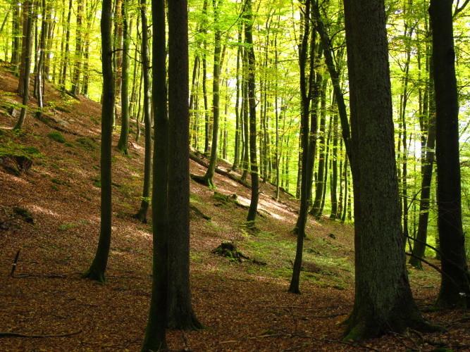 So schön hier im Wald