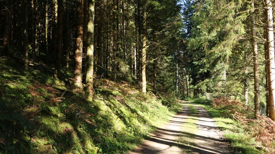 Durch den schönen Herbstwald...