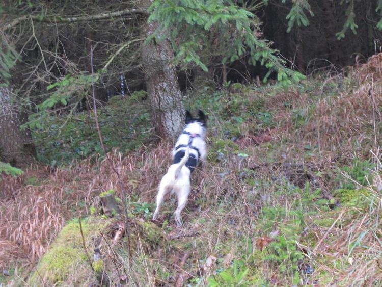 Mal ein Abstecher in den Wald