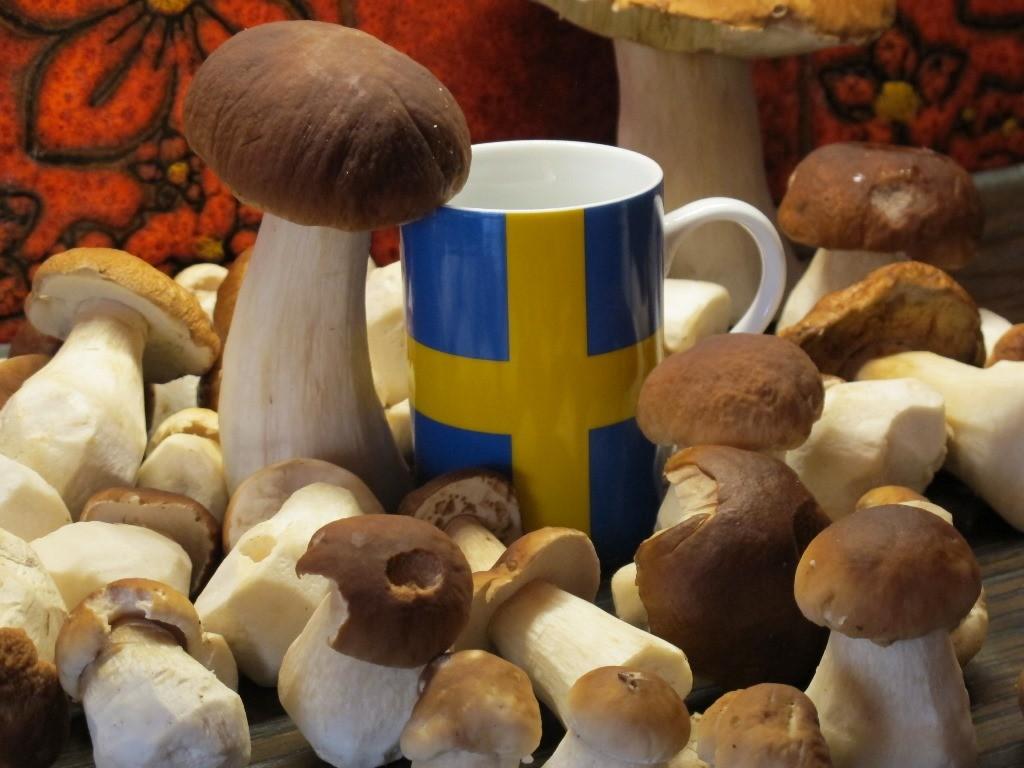 Schweden - dieses Jahr das Land der Steinpilze! Es war unglaublich!
