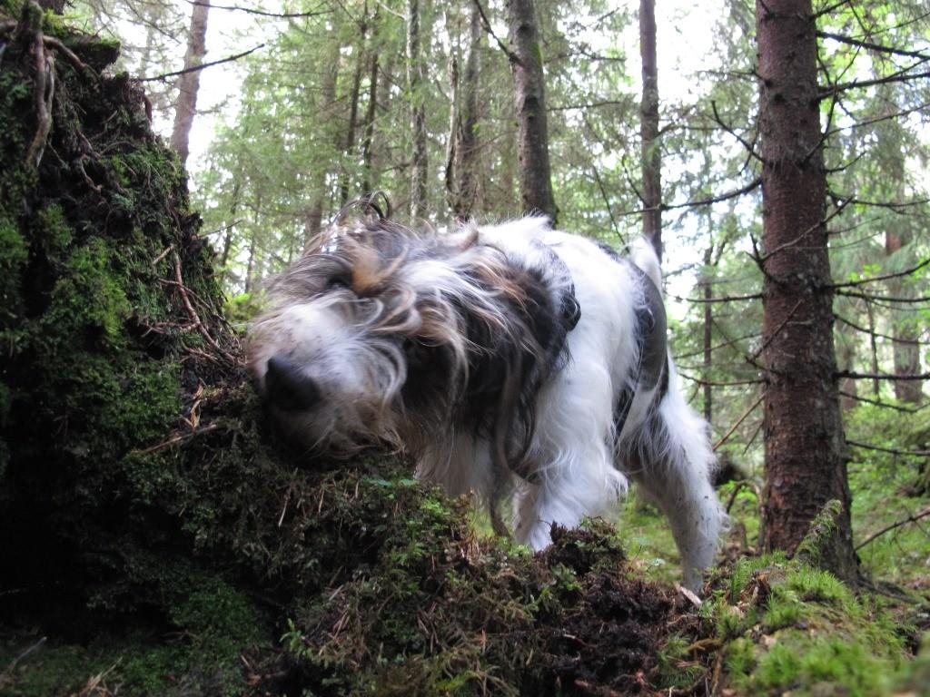 ...der Wald muss ja auch mal umgegraben und ausgedünnt werden