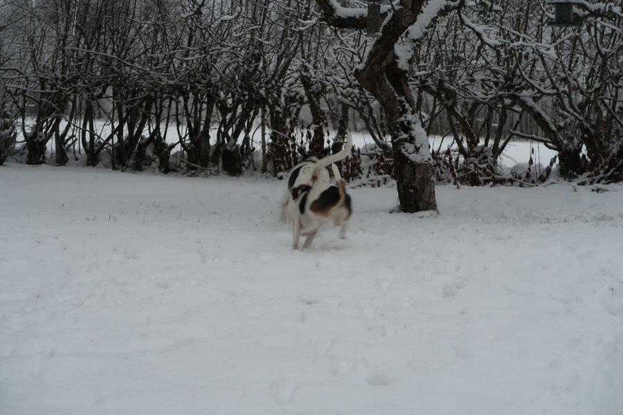 Und ab durch den Schnee...