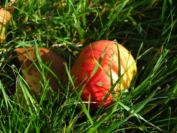 ...lecker Apfel