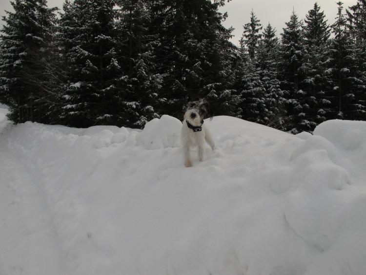 Na, was guckt ihr? Mein Schnee!