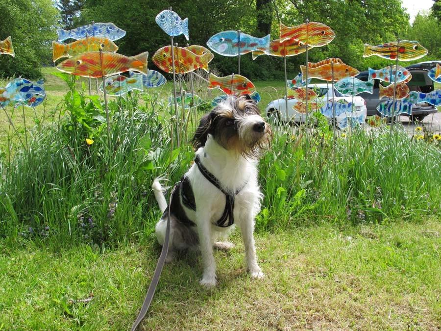 Ein Foto für Herrchen mit de Fische, OK  ;-)