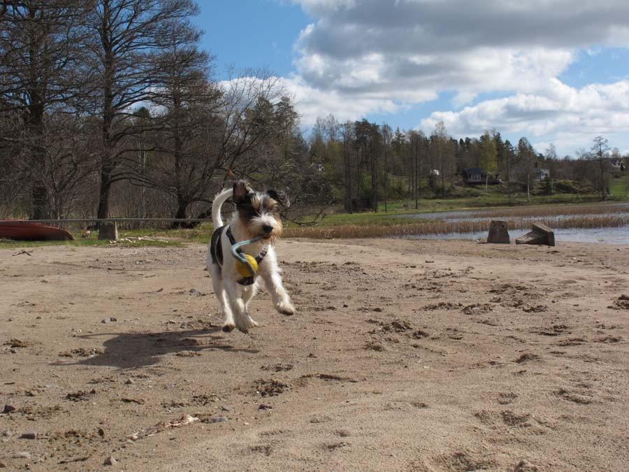 Bjarne und sein Strandspaß