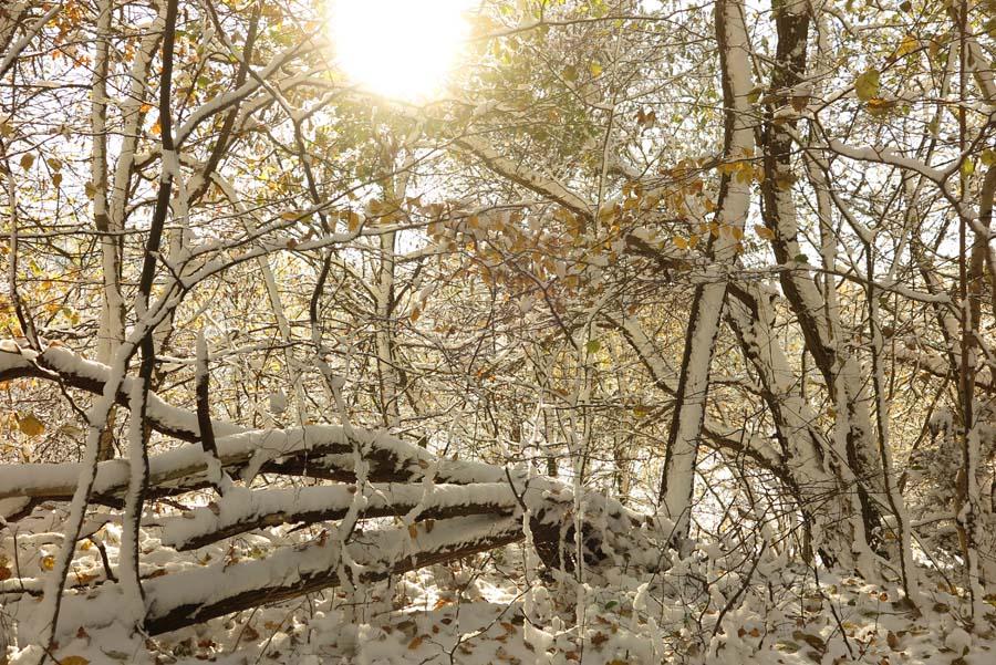 ...und weiter ins Naturschutzgebiet...