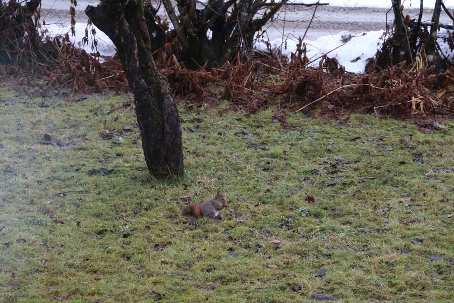 ...das Eichhörnchen sucht letzte Reste...