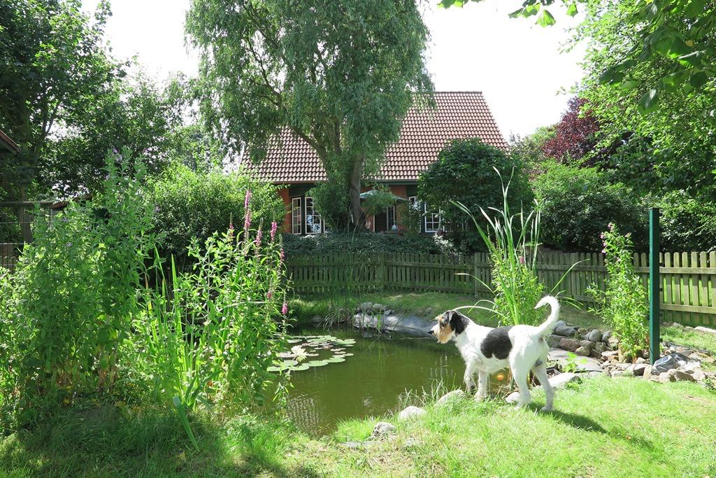 Mein schöner Teich