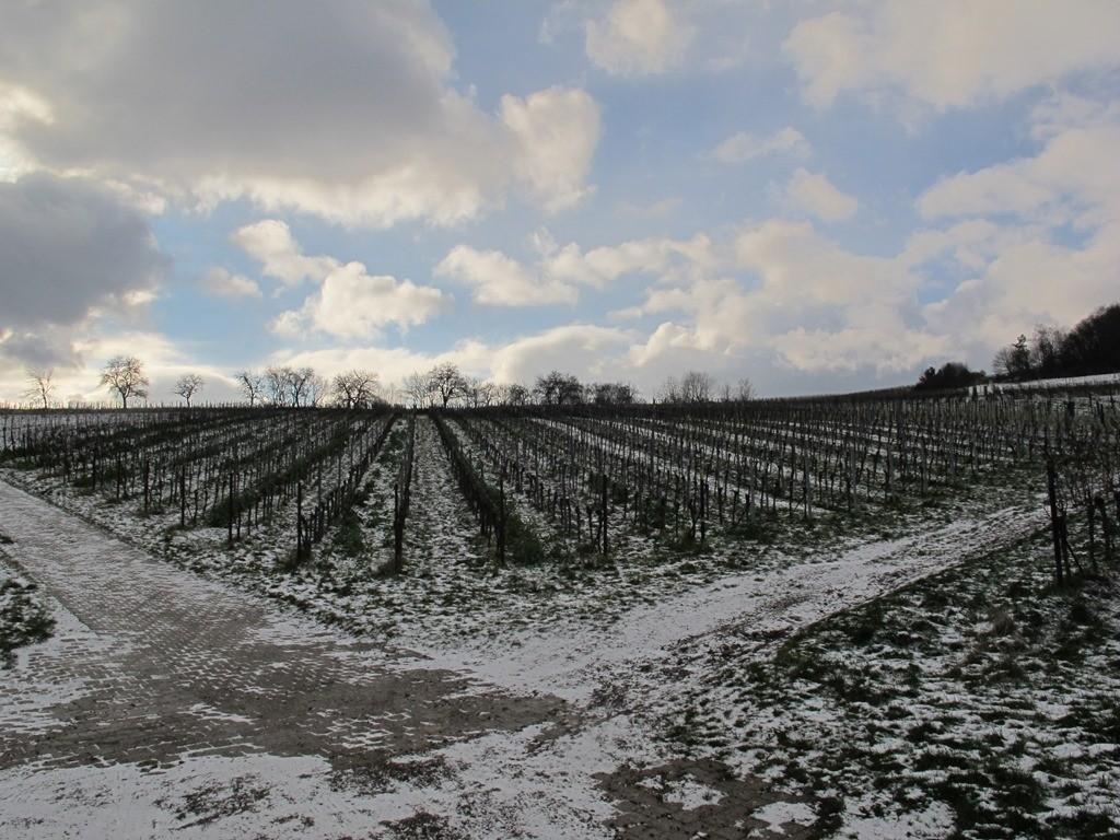 ...und rein in die schneebedeckten Weinberge...
