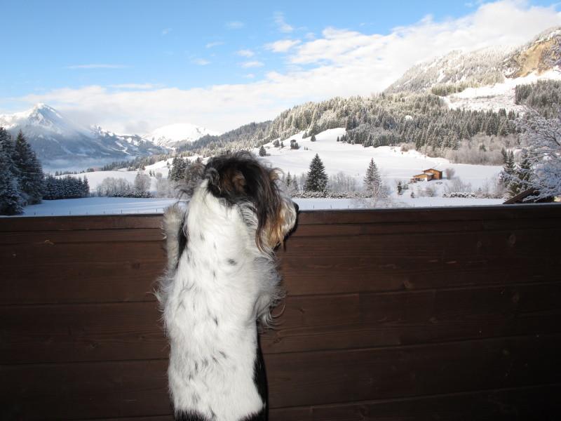 Der Blick von meinem Balkon...