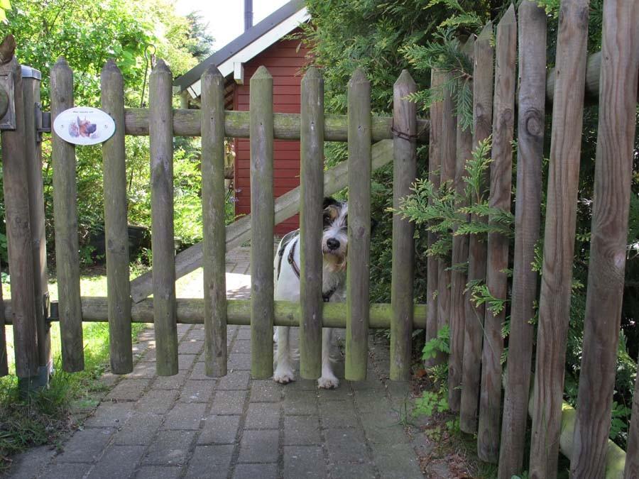 Angekommen in Pülsen - Frauchen kommst du auch?
