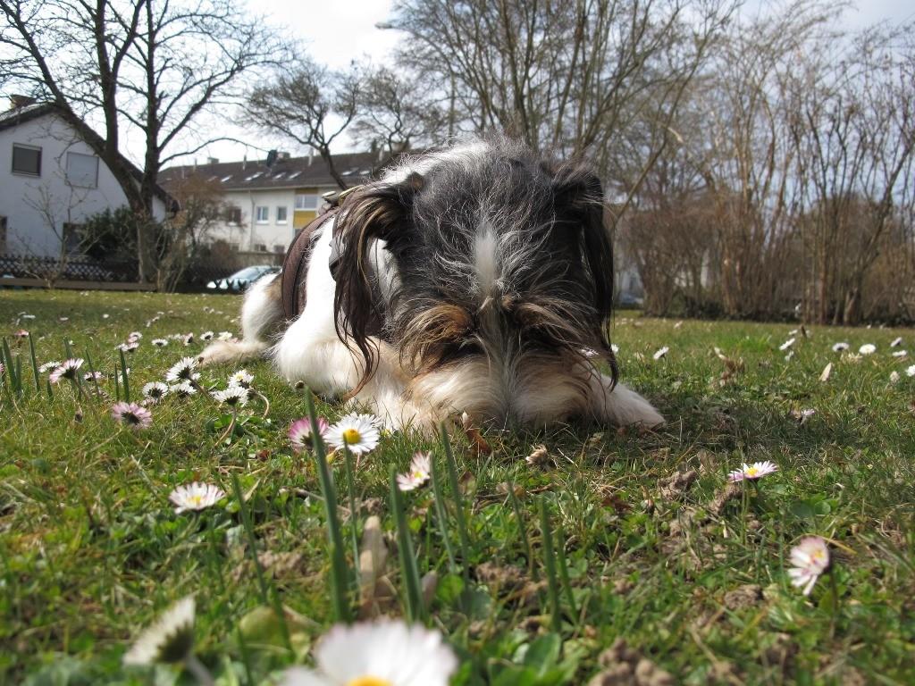Gras und Erde schmecken auch wieder