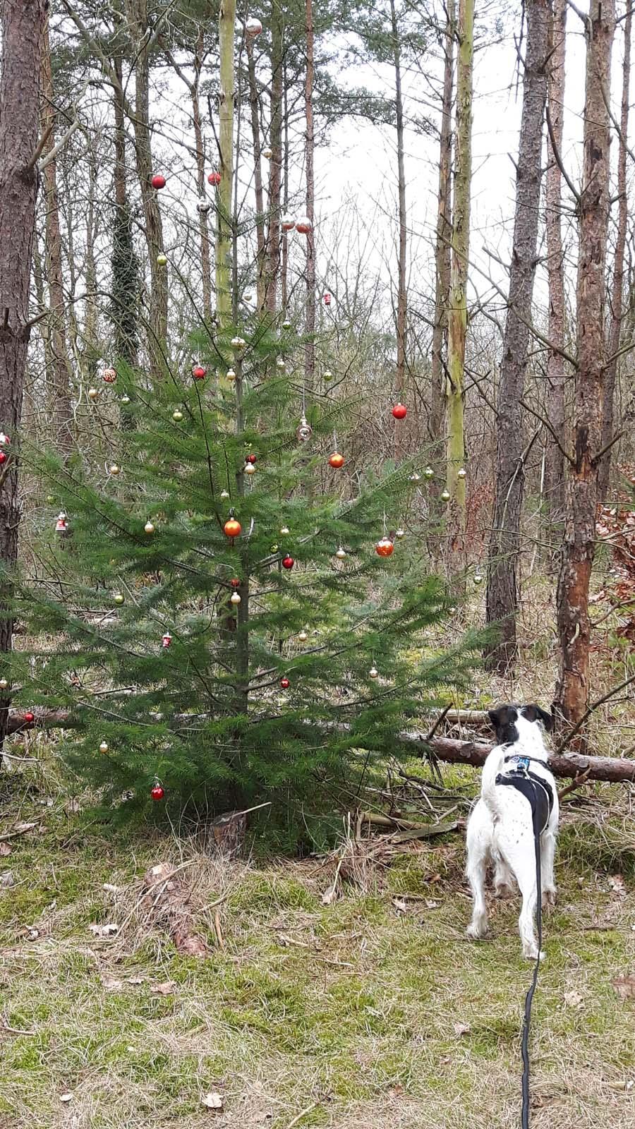 Mitte März - ein geschmückter Baum mitten im Wald!?