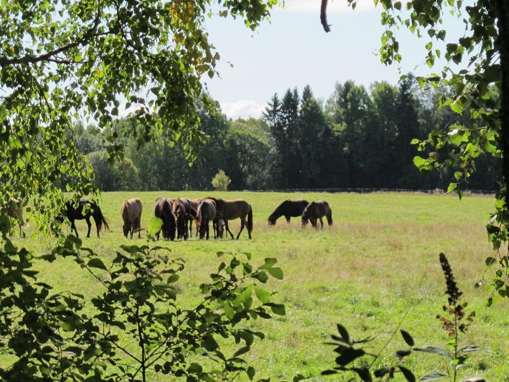 Nachbars Pferde hinterm Haus