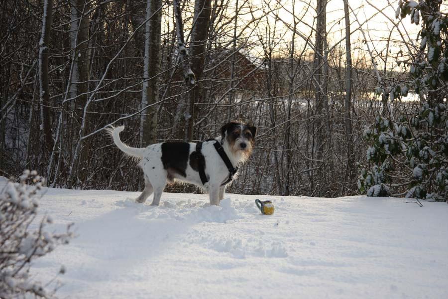 Endlich Schnee unter den Pfoten...