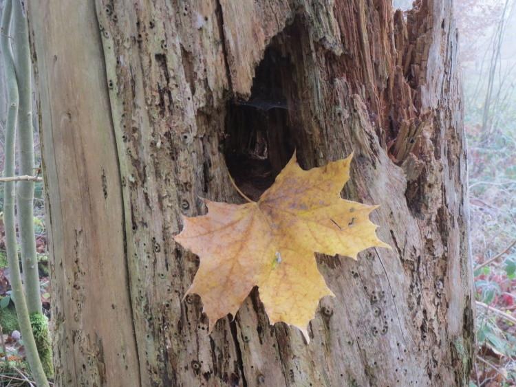 Der Herbst lässt trotz November lange auf sich warten
