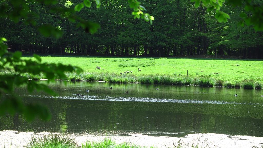 ...wieder mal ein See... mit Enten ;-)