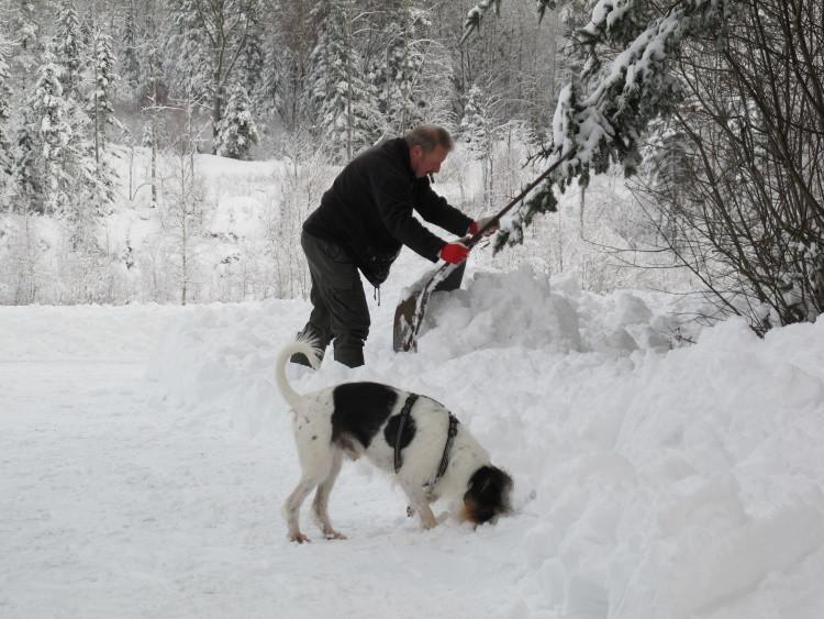Schneeschieben mit Herrchen